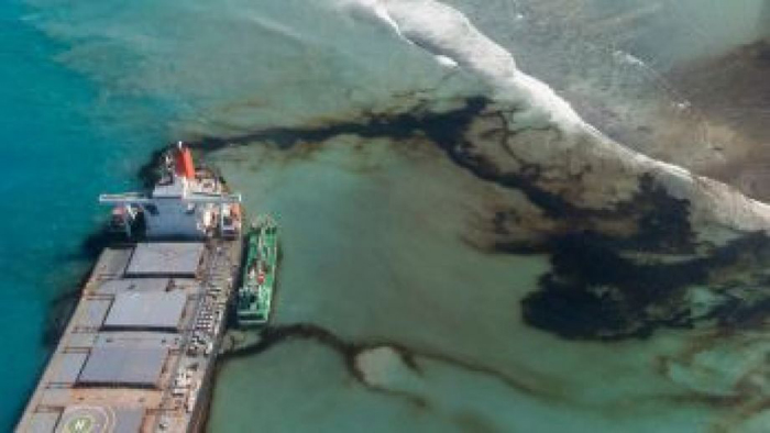 Japanese oil spill kills at least 40 dolphins